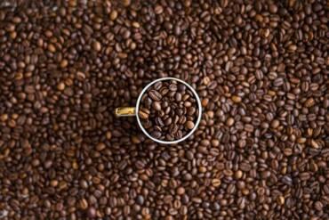 Impacta cambio climático producción de café