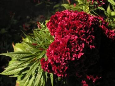 Terciopelo: suavidad, belleza y tradición