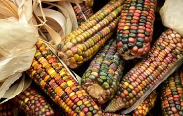 Los cinco productos que más se producen en México