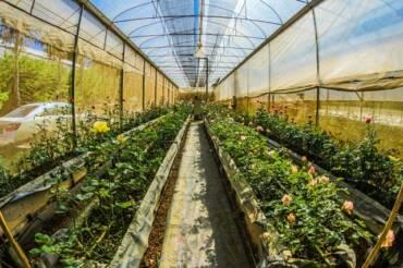 Agricultura protegida: una cosecha asegurada