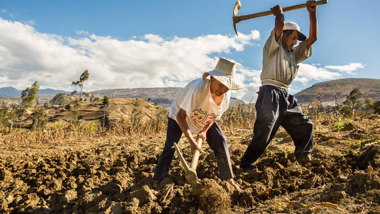 Cinco estados con cinco estrellas en producción agrícola
